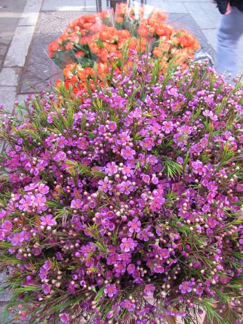Paris in April flowers 1